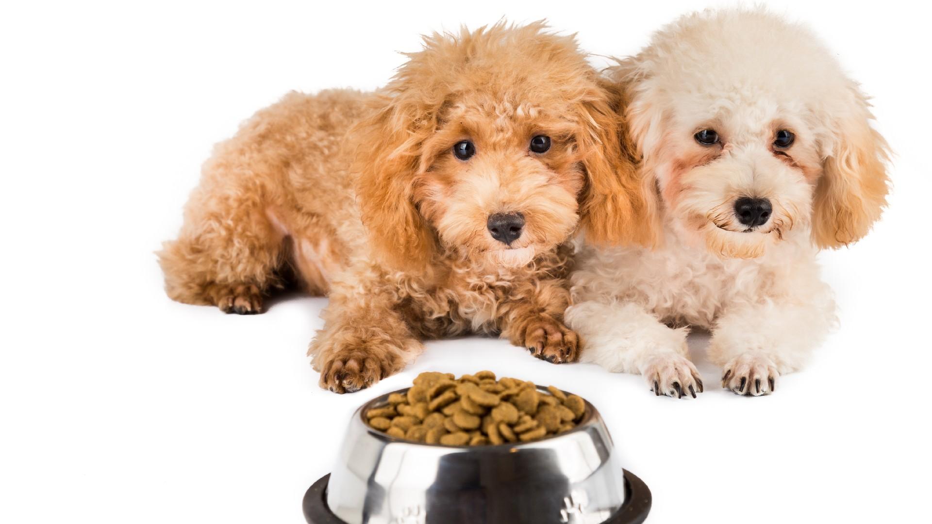 אוכל מומלץ לגורים