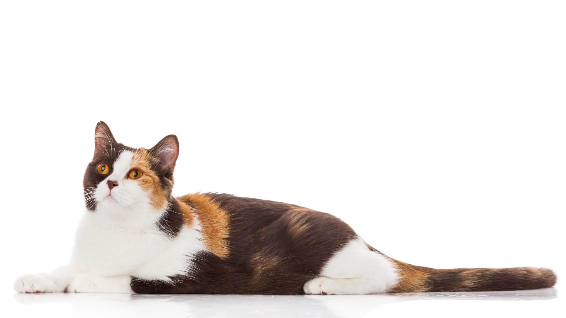 איך לבחור מזון איכותי לחתול